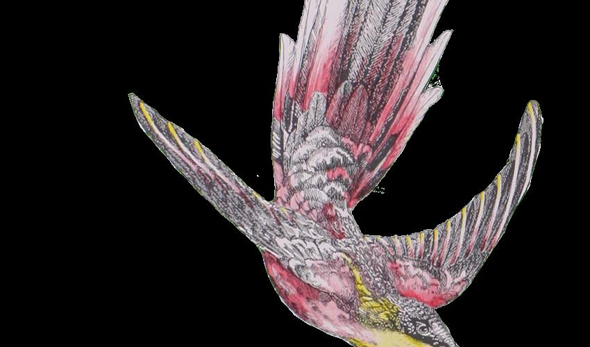 mw-bird